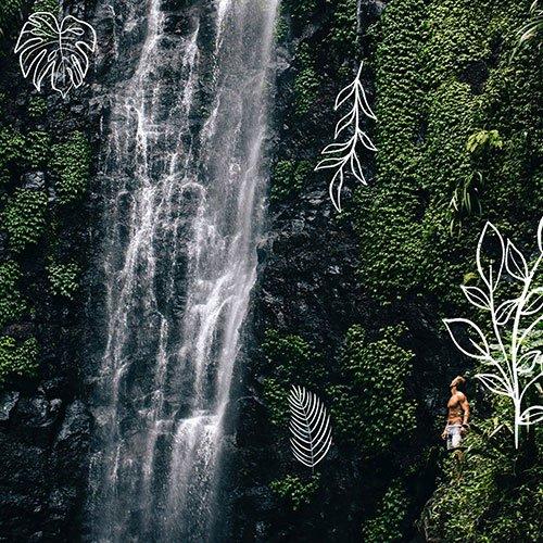Reef & Rainforest